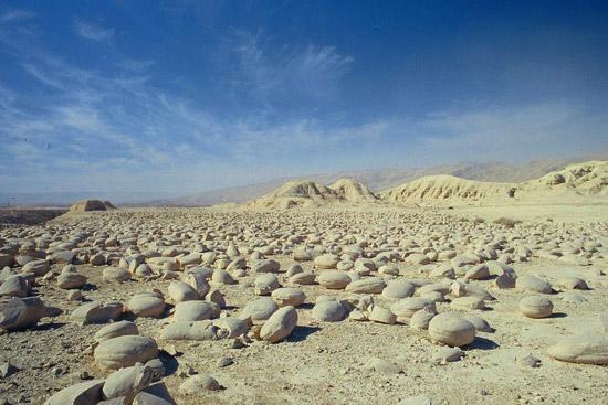 Bulbs field, Tzin Valley, tours in the Negev